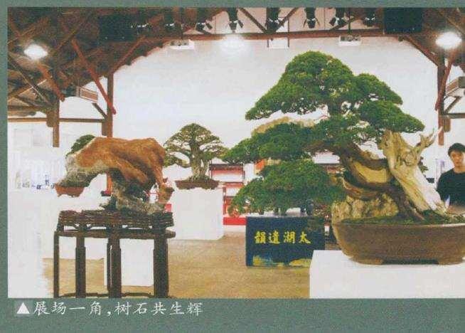 上海盆景文化博览会