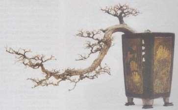 树桩盆景生桩怎么打坯的3个方法