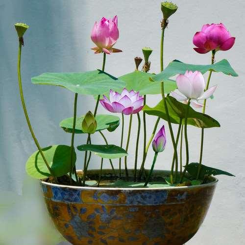 为什么水养植物最宜在书房里