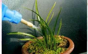 夏季兰花怎么淋雨和施肥的3个方法