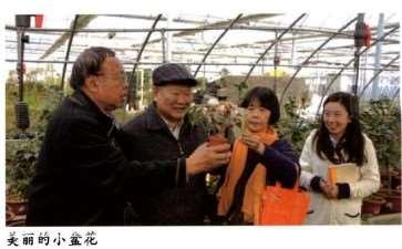 2016 上海植物园的束花茶花育种