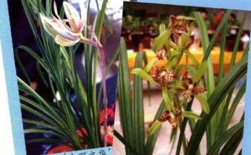 云南兰花栽培历史可上溯1200多年