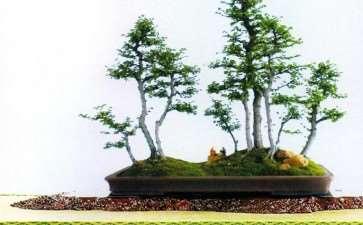 盆景借用六法来指导创作的6个意义