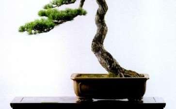 中国盆景构图学有2大特点 图片