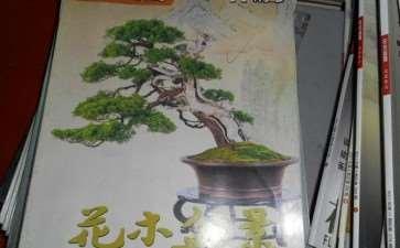 看《花木盆景》杂志盆景赏石版新变化