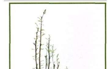 韩学年制作的丛林岭南盆景 图片