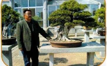 泰安石景涛从事盆景艺术创作30余年