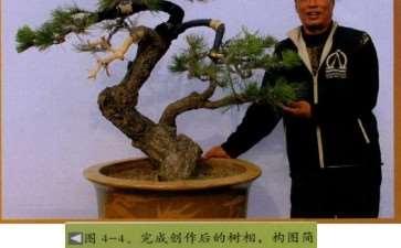 图解 台湾黑松怎么制作盆景的4个步骤