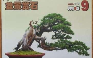 《花木盆景》盆景赏石版是我家的三宝