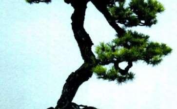 童梦—韩学年盆景艺术 图片