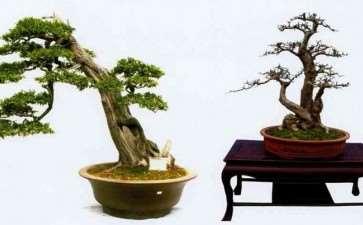 读了2010年《花木盆景》盆景赏石版
