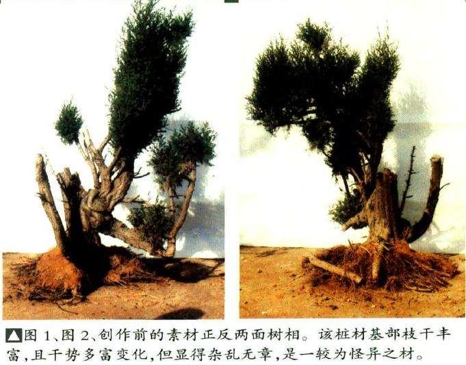 创作前的素材正反两面树相