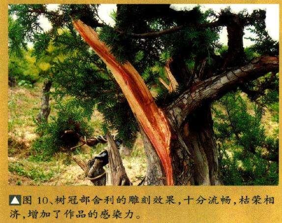树冠部舍利的雕刻效果