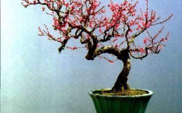 杂木盆景树种可再分为以下5类 图片