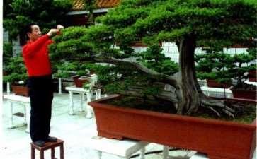 泰州鞠桂林盆景艺术欣赏 图片