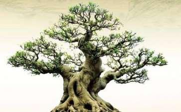 花木盆景杂志应该怎么认真的读