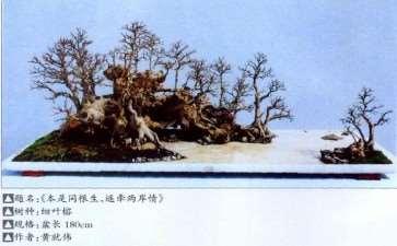 杂木盆景成型后怎么养护的2个方法
