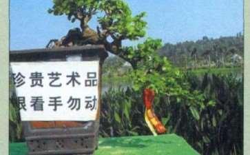 日本 第十届亚太盆景赏石展 图片