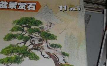 《花木盆景》盆景赏石版 我迷航里的灯塔
