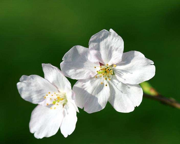 怎么实施花卉保险的5个工作建议
