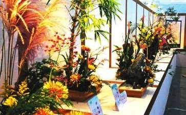 2020年 花卉零售行业遭受严峻挑战