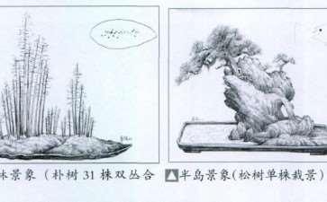 盆景合植怎么换土的5个注意事项