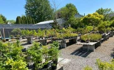 2021年春季盆景展在纽约罗切斯特举行