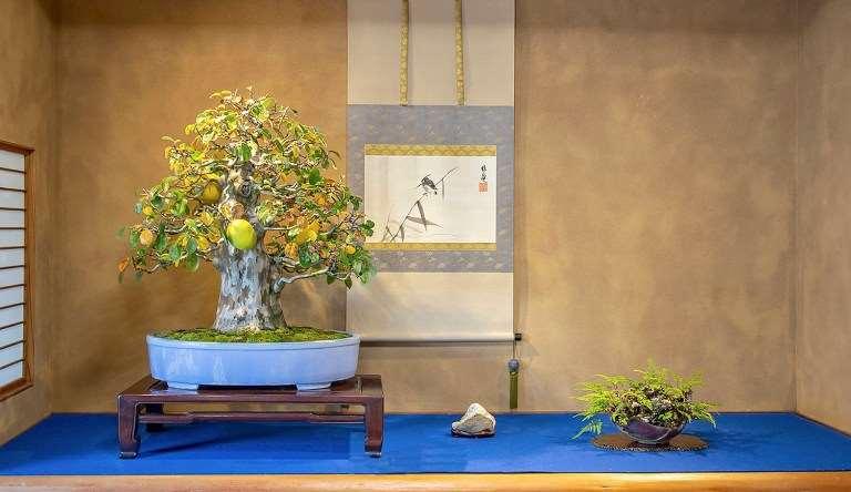 日本盆景协会骏河支部 50周年盆景展