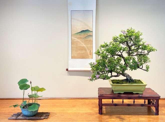 纽约盆景协会都会举办花园之旅