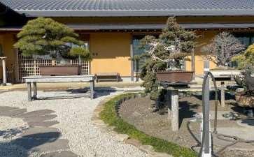 2020年 参观日本大正园盆景园 图片