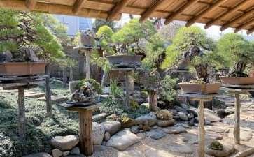 参观东京春华园盆景博物馆 图片