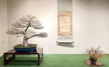 为冬季剪影盆景博览会设计展示的方法
