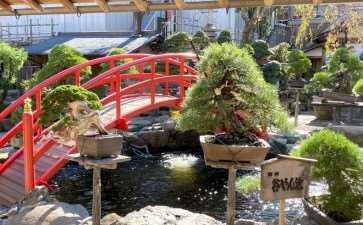 2019年参观东京春华园盆景博物馆 图片