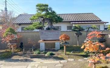 2019 秋季日本国际盆景考察 图片