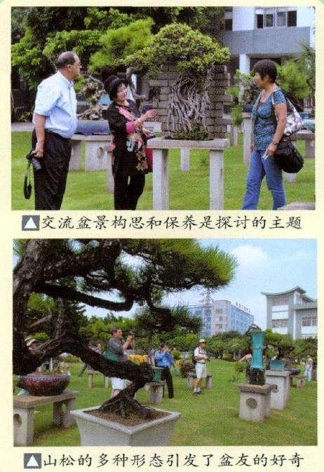 顺德盆景协会成立30周年