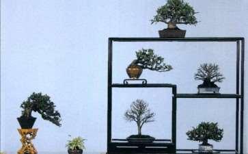 小品盆景素材怎么选择的3个条件