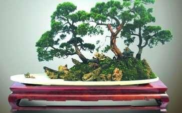 让《花木盆景》杂志发挥更大的的作用