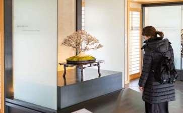 2020 大宫盆景博物馆 追求美的境界