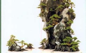 山水盆景《蓬莱仙境》的创作过程 图片