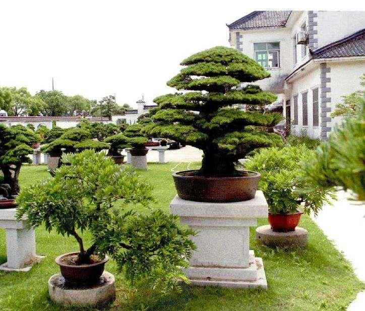访问上海盛家盆景园