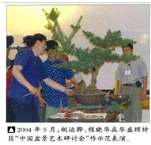 国外盆景大多受日本盆栽的影响