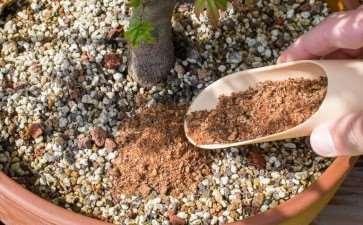 盆景肥料对水pH值的影响 图片