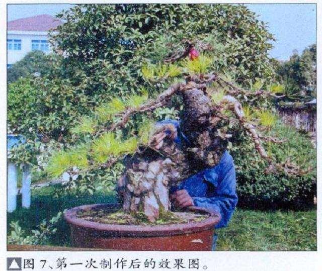 2011中国盆景《久发杯》精品展公告