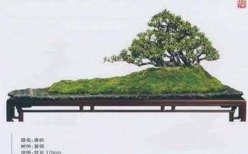 欣赏韩学年大师盆景新作《春妖》 图片