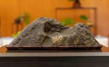 在湾区水石和小品盆景秀上观赏石头