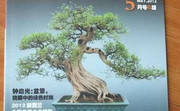 《花木盆景》盆景赏石版第4期 图片