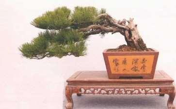 温州盆景怎么传承创新的2个方法 图片